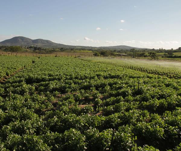 Águas de março indicam tempo de boas colheitas para agricultores sergipanos