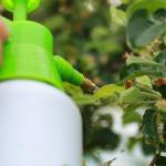 Sistema Digital de Receituário Agronômico será lançado segunda-feira pelo Crea-SE
